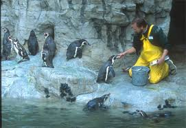 jobs in st louis mo so you want to be a zookeeper saint louis zoo