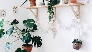 plants that don t need sunlight to grow plant low light plants wonderful common indoor house plants 10