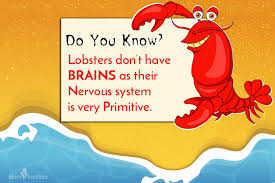 interesting lobster facts for