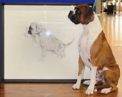 boxer dog shows 2016 boxer association of victoria inc dog lovers show may 2014