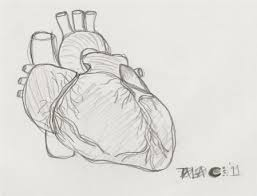 anatomical heart sketch by demented day dreams on deviantart