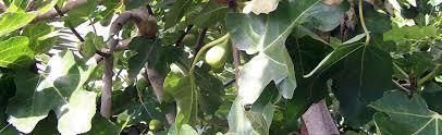 growing fruit trees portland nursery
