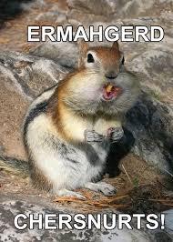 Ermahgerd Animal Memes - pinterest de ideeëncatalogus voor iedereen