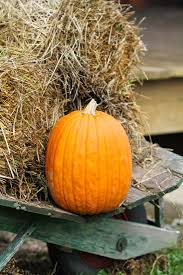Home Made Fall Decorations 3327 Best Seasonal Fall Images On Pinterest Fall Porches