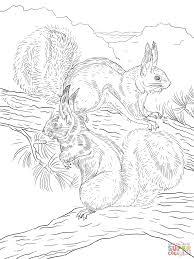 abert u0027s and kaibab squirrels coloring page free printable