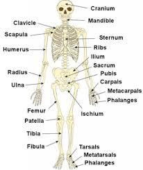 human anatomy michael mckinley anatomy textbooks education books