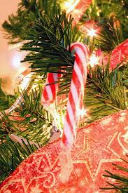 where to buy pickle candy canes candy canes 10 things you didn t the feast