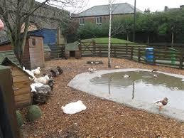 17 best ideas about duck 17 best ideas about duck pond on pinterest duck coop duck pond