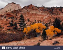 cottonwoods peak fall color dry wash zion national park