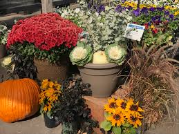 city floral greenhouse garden centers denver gardening shop