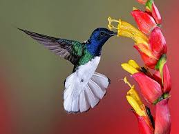 Flower And Bird - mp3 free forever flowers for flower flowers and