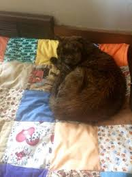 Temporary Blindness In Dogs Our Cat Has Gone Blind Sudden Blindness In Cats The