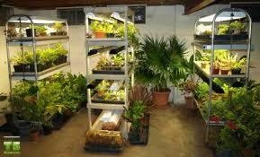 indoors garden how to set up an indoors garden indoor growing pinterest grow