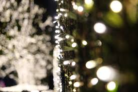 christmas tree flower lights wallpaper sunlight night branch green christmas tree