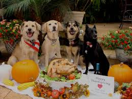 the best and worst thanksgiving foods to with your urdogs
