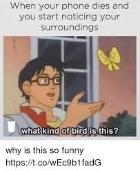 Funny Phone Memes - 25 best memes about what kind of bird is this what kind of