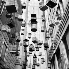 black and white bird cage art print angel place sydney