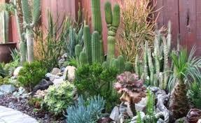 Diy Rock Garden 8 Collection Desert Rock Garden Ideas