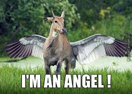 Angel Meme - angel memes best collection of funny angel pictures