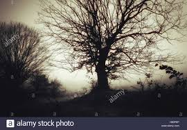 scarey halloween images dark spooky landscape old tree in fog scary halloween scenery