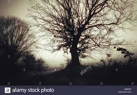 spooky halloween pics dark spooky landscape old tree in fog scary halloween scenery