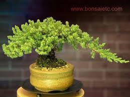 21 best ceramic trees images on stoneware a tree and