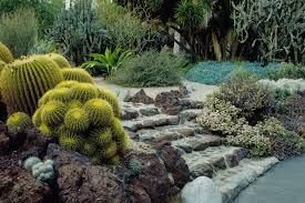 Types Of Community Gardens - the best types of cactus to grow in your garden