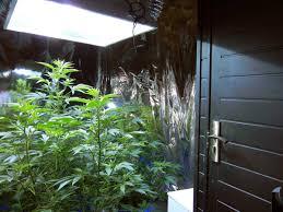 how to produce 1 gram watt of cannabis from your grow light