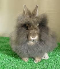 a rabbit u0027s vision