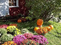 fall pumpkins wallpaper september afternoon leaves pumpkins apple autumn grass flowers