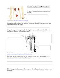 urinary system worksheet worksheets reviewrevitol free printable