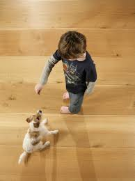 which wood floor is best for dogs floorsave