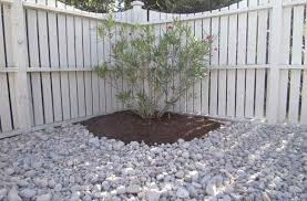 Backyard Ground Cover Ideas Garden Design Garden Design With Ground Cover Ideas For