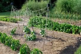smart fertilizer use a vegetable garden begins with a soil