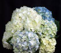 bulk hydrangeas 31 best bulk flowers at wholesale prices open to the