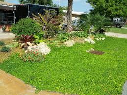 gardening south florida style terrific tuesday