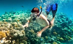 Louisiana snorkeling images Scuba ventures shreveport la groupon jpg