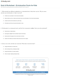 Echolocation For The Blind Quiz U0026 Worksheet Echolocation Facts For Kids Study Com