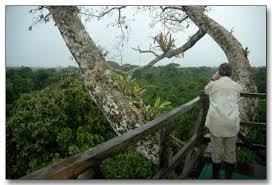 canopy amazon amazon rainforest canopy