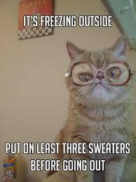 Freezing Meme - the best of grandma cat meme 15 pics