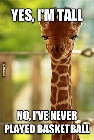 Meme Giraffe - annoyed giraffe giraffe sports food and funny pics