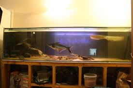 8ft x 2ft x 2ft fish tank aquarium for sale at aquarist classifieds