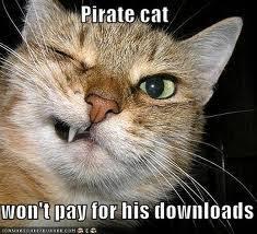 Cat Pic Meme - cat memes