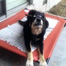 dog burrow bed oxgord steel framed portable elevated pet bed pet