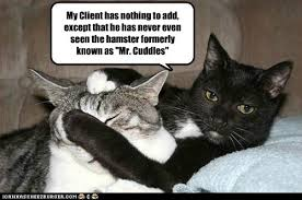 Lawyer Cat Meme - lolcats trial lol at funny cat memes funny cat pictures with