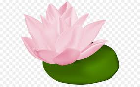 pink water lily transparent png clip art image free transparent