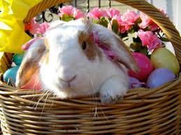 easter basket bunny bunny in an easter basket in the the daily bunny