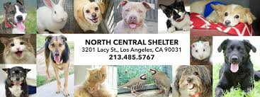 boxer dog adoption los angeles friends of north central shelter los angeles animal services
