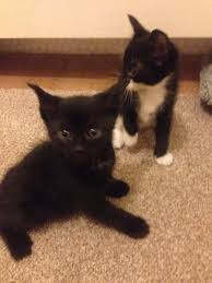 100 beautiful kittens 171 best kittens images on pinterest