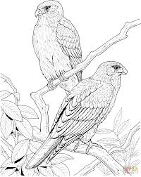 falcons on the tree coloring page free printable coloring pages